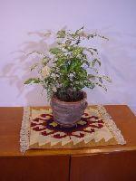 キリムと植物